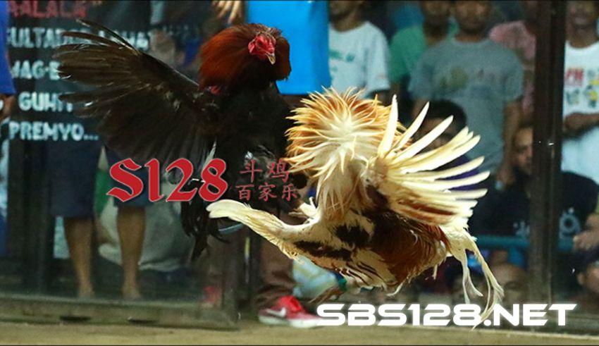 Login S128 Permainan Sabung Ayam Online Filipina