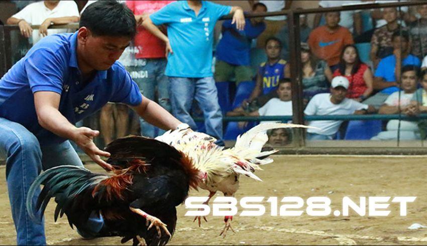 Login SV388 Situs Sabung Ayam Online & Live Casino