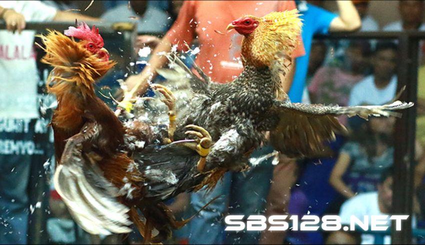 Sabung Ayam Online Uang Asli Indonesia